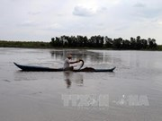 Mekong Delta farmers begin shrimp harvest