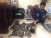 Hanoi police busts major wildlife trafficking ring