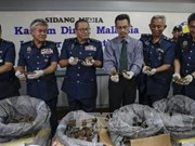 Malaysia seizes largest-ever amount of pangolin scales