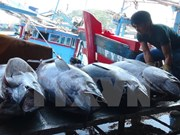 Vietnam, China boost sustainable fishery development in Tonkin Gulf
