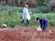 New avian flu outbreaks in Dak Lak, Dak Nong