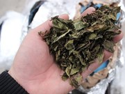 Containers containing Shisha, Khat leaves detected in Hai Phong