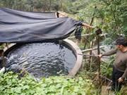Salmon farming in Vietnam