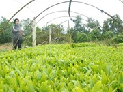Farmers reap benefits of planting local trees