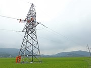 Electricity sector urged to reduce power loss