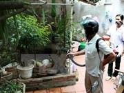 Hanoi reports first death from dengue fever