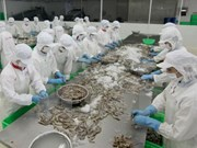Vietnam's shrimp export to Japan sees sharp increase