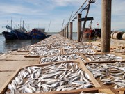 Fish from Formosa-contaminated waters being tested for safety