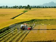 Tra Vinh restructures food crops to adapt to climate change