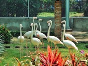 Sai Gon Zoo opens flamingo garden, water park