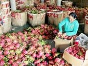 Vietnamese fruits conquer Japanese market
