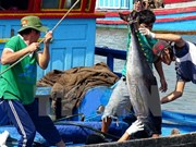 Vietnam's tuna exports witness impressive growth