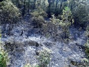 Central Highlands region faces natural forest drop