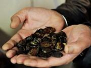 Invasive alien species become problem for managerial agencies