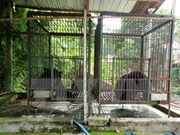 Three captive Tibetan bears transferred to care unit