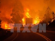 Condolences sent to Portugal over forest fires