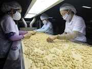 Vietnam expects to earn 3.3 billion USD from cashew exports