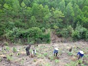 Lang Son records breakthrough in forest development