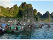 Eco-friendly aquaculture model on Ha Long Bay proves fruitful