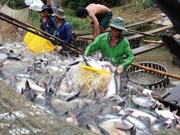 Mekong Delta seeks ways for greener Tra fish industry