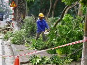 Hanoi to inform residents of tree-cutting plans