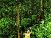 Forest funds boost northern livelihoods