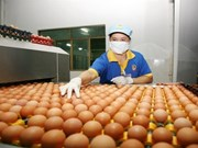 HCM City plans to trace poultry origins