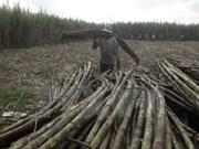 Tuy Hoa sugar factory to enhance production capacity