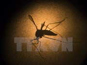 Malaysia reports 122 deaths from dengue fever