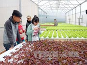 Lam Dong to set up 11 sustainable agriculture production chains