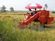 Ninh Thuan invests 1.2b VND to agricultural industrialisation