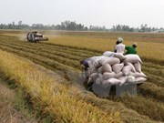 Vietnam, Mozambique discuss promoting agricultural ties