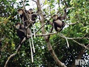 Dong Nai province moves to protect black-shanked douc langurs