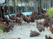 Philippines reports first avian flu outbreak