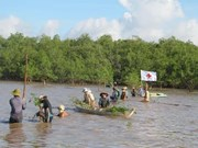 Soc Trang: Mangrove co-management model proven effective