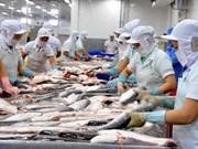 Tra fish exports to US remain steady