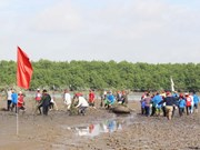 Japanese, Quang Ninh Red Cross volunteers plant mangrove forest