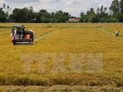 FAO pledges continuous support for Vietnam