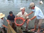 Bac Lieu strives to become centre of shrimp industry
