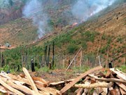 PM asked for strong measures to cope with deforestation