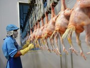 First batch of Vietnamese chicken to depart for Japan in Sept