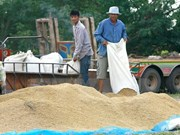 Thailand remains world's biggest rice exporter