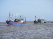 Binh Dinh fishermen in bumper catch