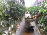 Lam Dong farmers go high tech