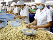 Cashew exports in eight months fetch 2.2 billion USD