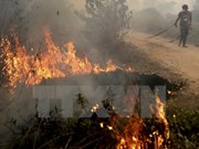 Indonesia detects 27 forest fire hotspots
