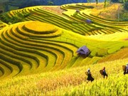 Vietnam named among 20 most beautiful countries