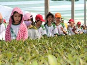 HCM City seeks solutions to promote agriculture tourism