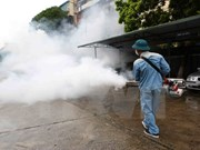 Hanoi: 384 dengue outbreaks remain