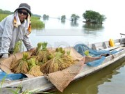 Thailand: Cabinet approves rice support package